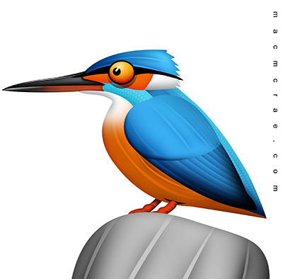 King Fisher Illustration